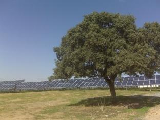 A SOLAR farm planned for Ilminster could look like this Spanish equivalent. PHOTO: Submitted.