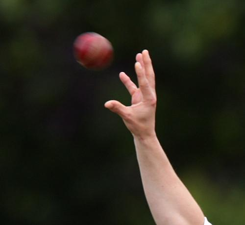 Umpires needed for Somerset 8-a-side cricket competition