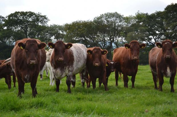 Compensation payout for Somerset farmer after military aircraft spooks cattle