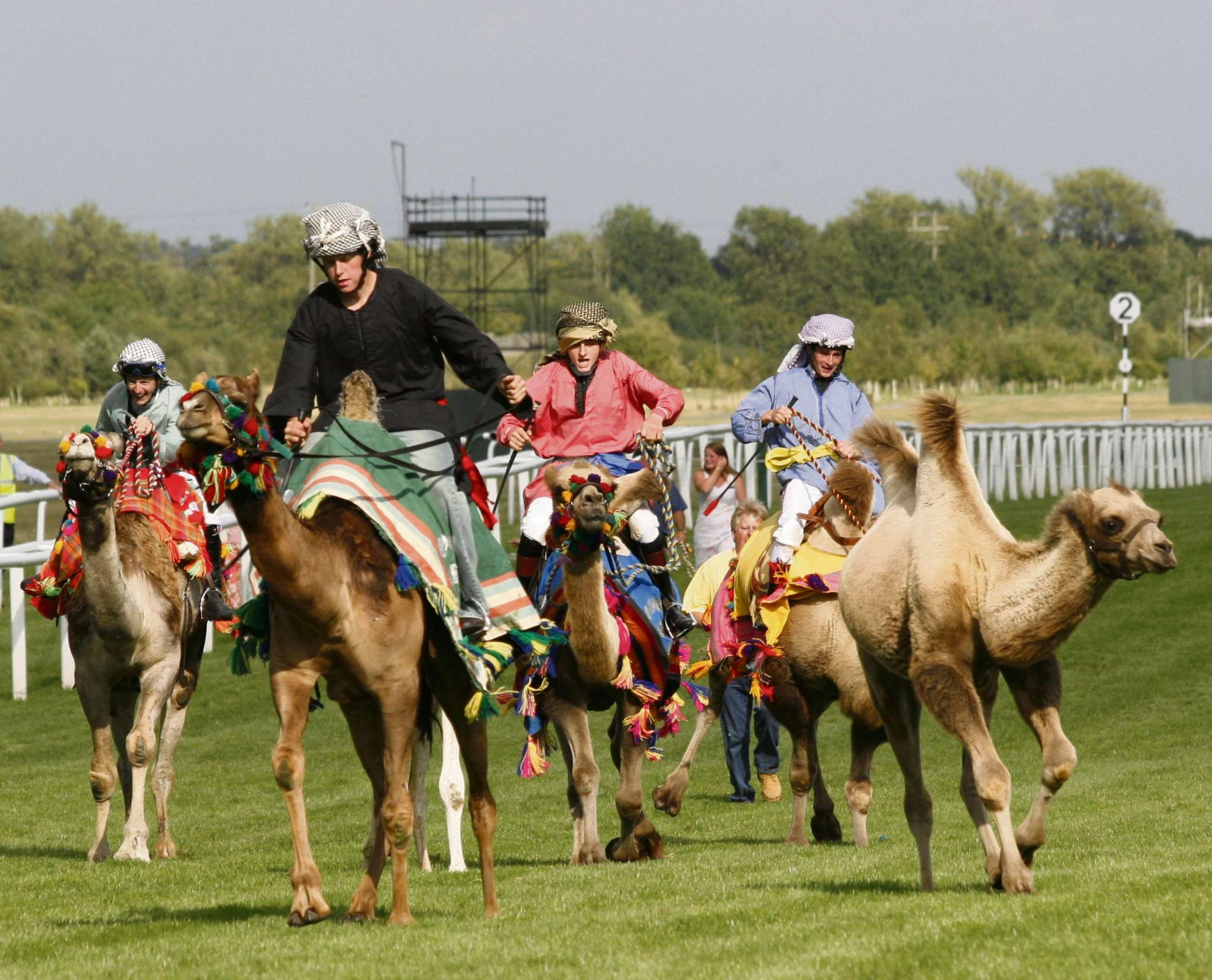 Camel racing has proved popular at other events across the country.
