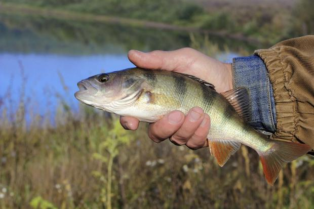 ANGLING: Rich pickings in Dillington Pond summer league