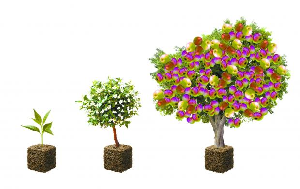 THE progression of the special trees, from sapling to maturity in six months