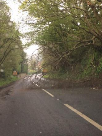 Tree blocking A356 in Crewkerne