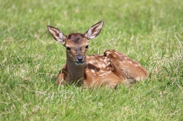 Red deer spotted at Wayford near Crewkerne