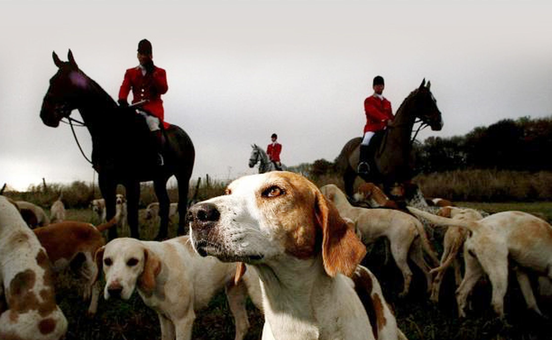 DIVISIVE: Foxhunting is back on the agenda