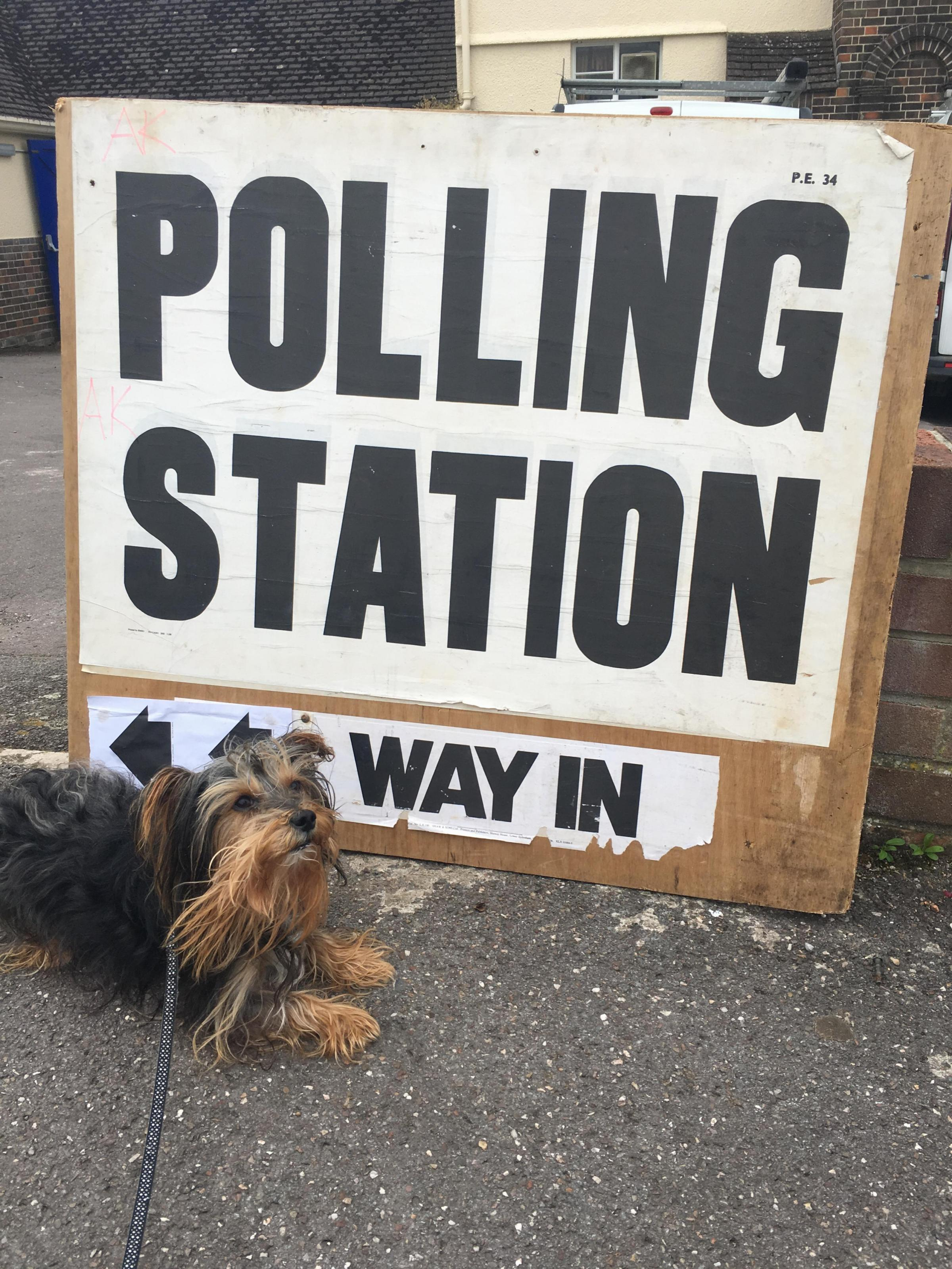 The real fun of election day - #DogsatPollingStations across Somerset