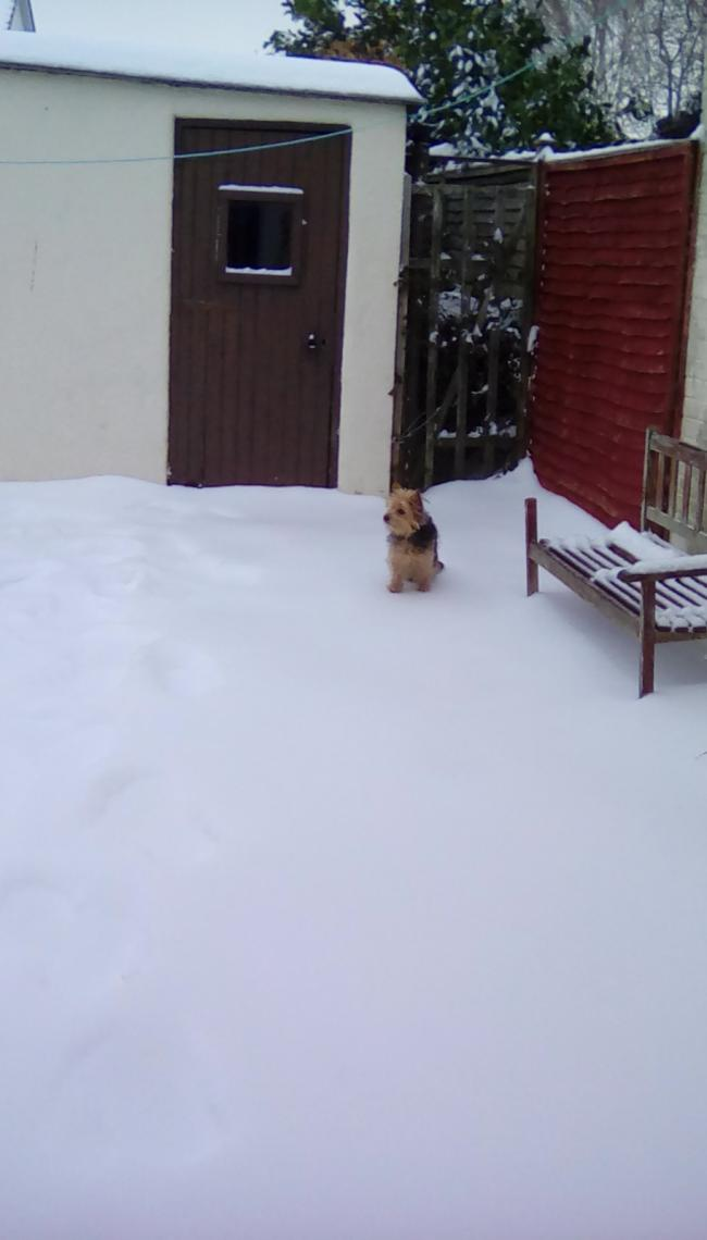 This is Ollie in the garden this morning? Where has all the grass gone?