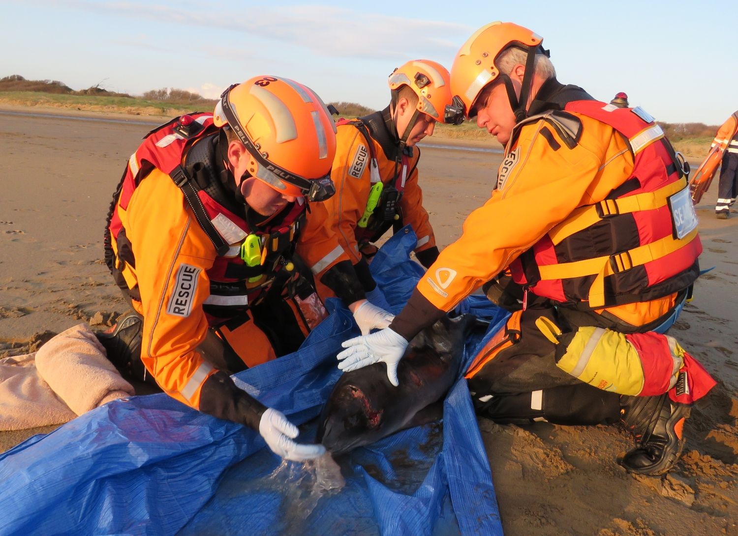 RESCUE: The team assisting the porpoise