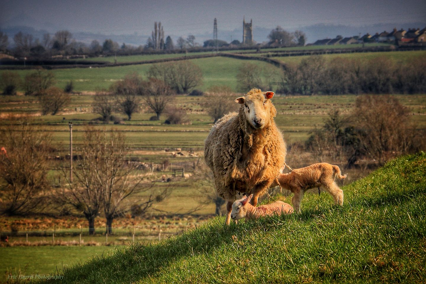 SPRING: Young ones on Burrow Mump - Eric Harris, Somerset Camera Club