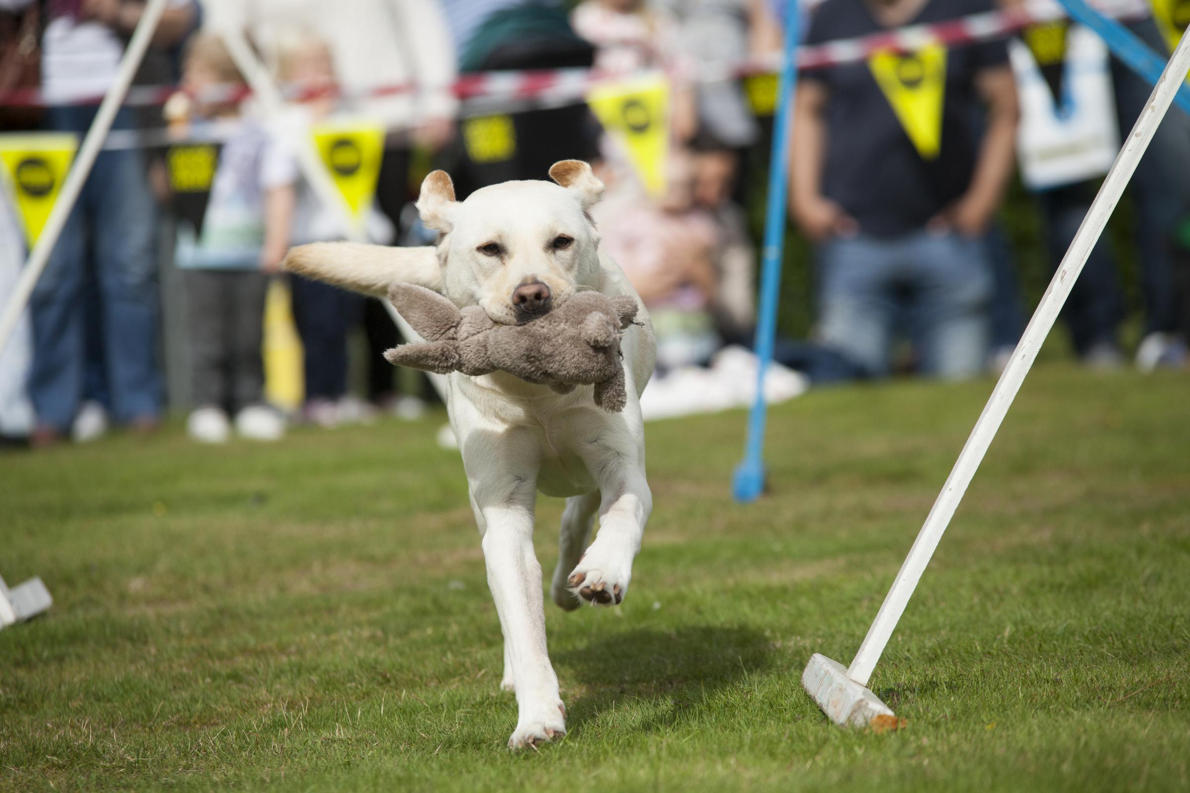 Guide Dogs Family Fun Day